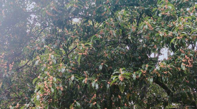 冠稲荷神社の境内も金木犀の良い香りが、周辺を包んでいます♪ぜひ神社へもお越しくださいね☆先日ティアラグランデホールを新しいスタイルでご利用いただきましたのでこちらもご紹介です♪